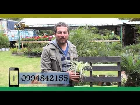 Eduardo Vintimilla, armando un jardín vertical