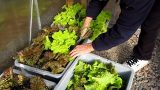 Container Garden UPDATE November 28th organic vegetable gardening how to plant