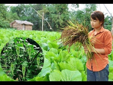 Survival Skills: How to Grow a organic vegetable garden – Part1