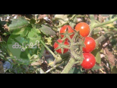 കോഴിവളം ഉപയോഗം ടെറസ് കൃഷിയില് – Chicken manure usage in terrace vegetable garden