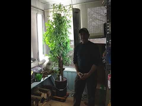 Vertical hydroponic tower-part two 3.5 months later