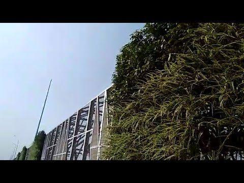 Nizamuddin bridges get vertical gardens