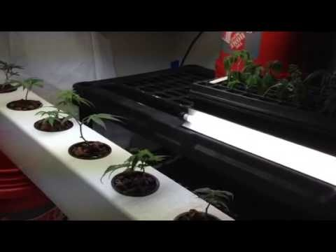My New Aeroponic system home made