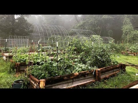 Why Raised Garden Beds? | The Benefits of Raised Bed Gardening | Roots and Refuge Farm