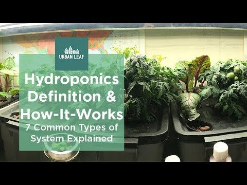 Hydroponics Definition & How It Works  – Kratky, NFT and others explained