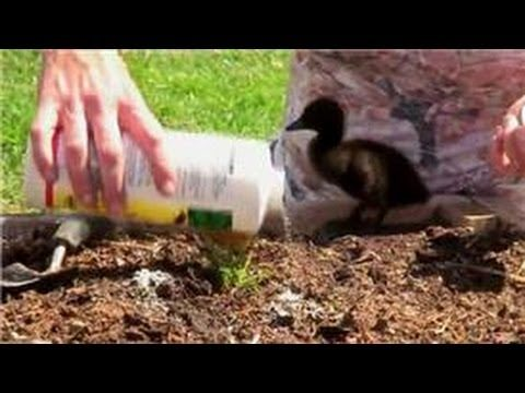 Vegetable Gardening : How to Control Ants in Vegetable Gardens