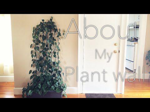 HOW I MADE MY PLANT WALL | Easy & Minimal |