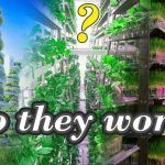 Future or Fantasy? Vertical Farming – Does it work?