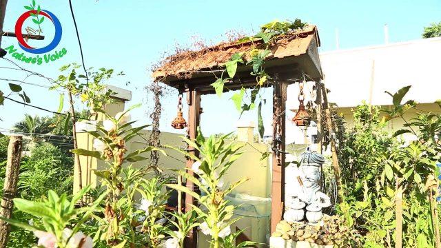 Terrace Gardening | How to Grow a Vertical Garden | RaghothamaReddy-9