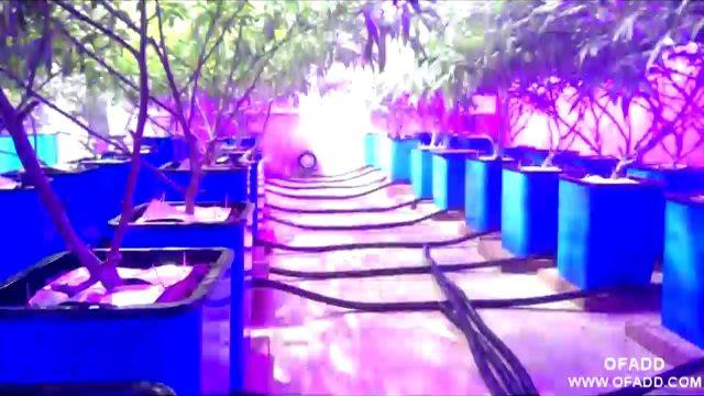 Marijuana Hydroponic System with LED Grow Lights