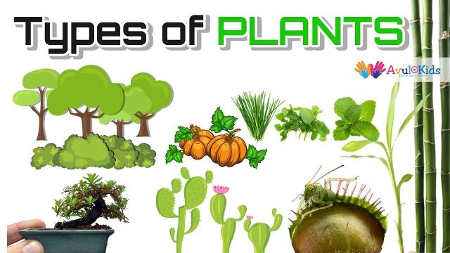 Types of plants | Science for kids |Trees,Herbs,Climbers,Creepers,Thorny plants,Water  Plants