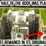 Follow Chicago's Example: Green Roofs and Big City Sustainability