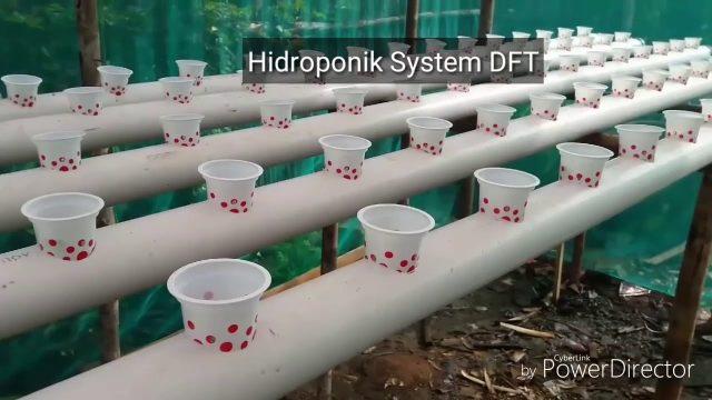 Pilih mana,  Hidroponik system DFT atau NFT