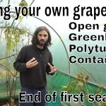 Setting up a backyard vineyard in the UK! End of first season….