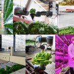 Agricultural Revolution! This Farm of The Future Uses High Tech Robots To Automate Everything