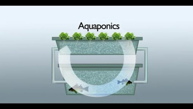What Is Aquaponics System?