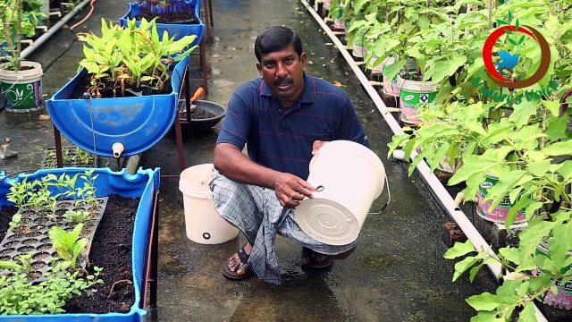 Terrace Gardening | Container Gardening Ideas
