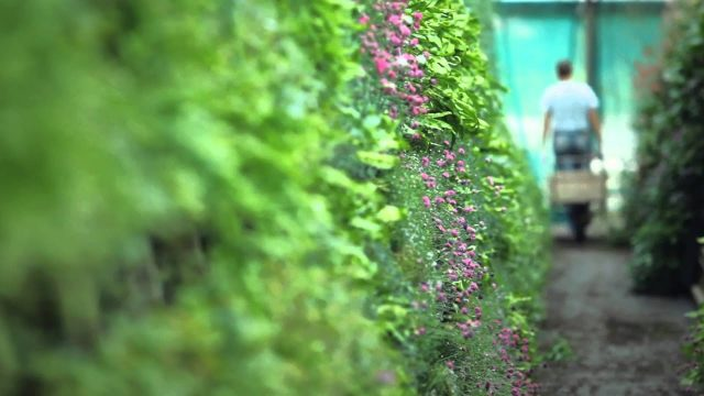National Art Gallery Living Wall Installation – Garden House Design