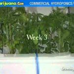 Marijuana Hydroponics Weed Grow Box – Weed Growing Equipment