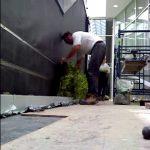 Living wall installation tutorial