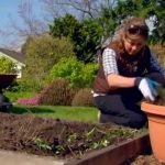 Starting a Vegetable Garden – Gardening Tips From Canadian Tire