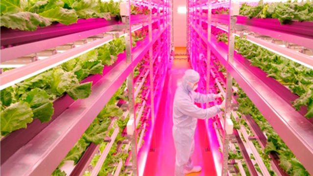 Agricultural revolution: New method to grow lettuce; Vertical farming explained – Compilation