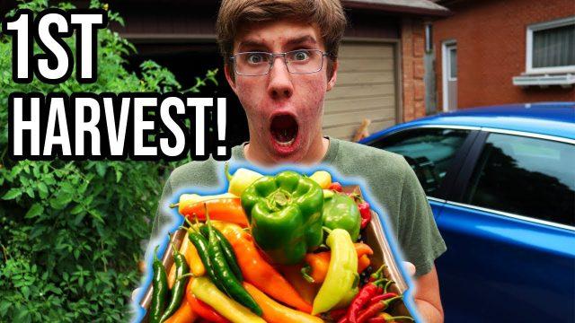 Abundant First HARVEST From The Organic Vegetable Garden 2018 | LucasGrowsBest