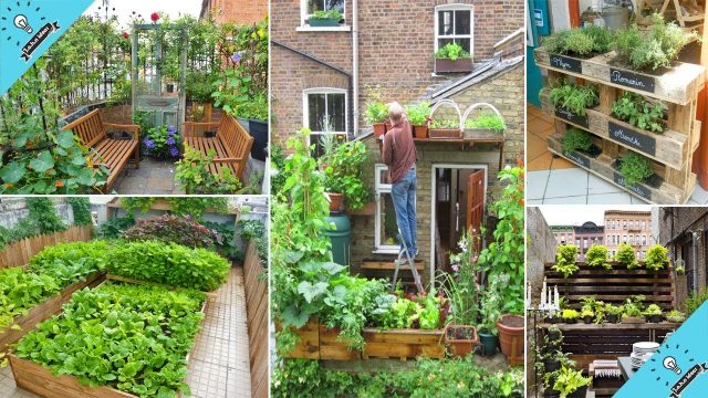 Small vegetable gardening ideas | 100 Clever Ideas to Grow in a Limited Space