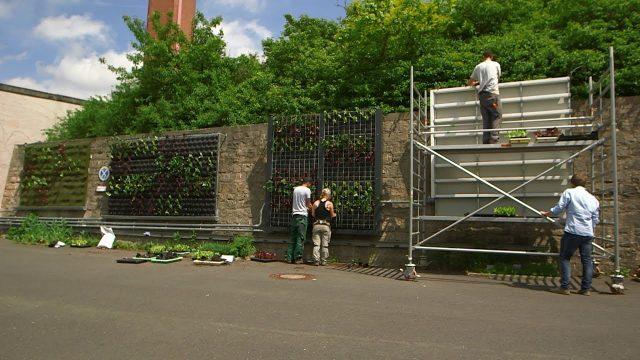 Grüne Wände: Gärtnern in der Vertikale