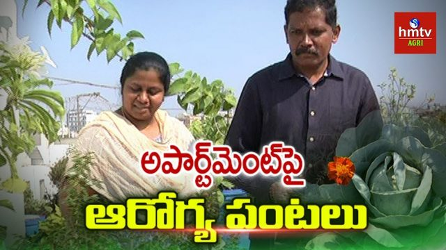 Roof Gardening in Apartment By Neelima & Ravi | Terrace Gardening | hmtv Agri