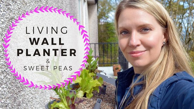 Living Wall Planter, Seedlings, & planting Sweet Peas