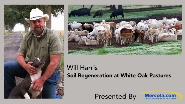 Soil Regeneration at White Oak Pastures