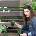 How to Design and Plant a Part Shade Living Wall Garden