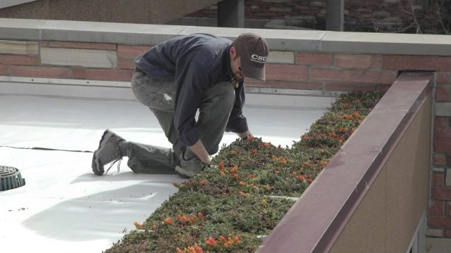 Colorado State University- Microbiology Building Green Roof