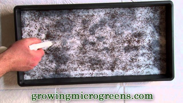 Growing Microgreens – Hydroponic Method Part 1 – Planting Micro Greens