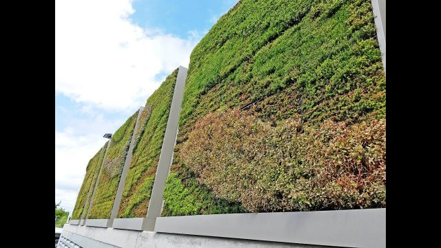 Yahoo! Commuting Coop Living Wall – Project of the Week 11/21/16