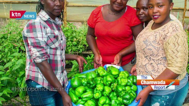 The Chamwada Report: Hydroponic Farming in Kenya