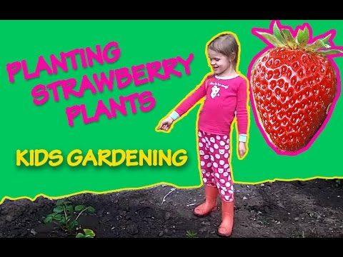✿ Fun For Kids Planting Strawberry Plants | Kids Gardening