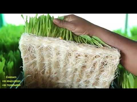 Hydrophonic system for rabbit farming 8792760107