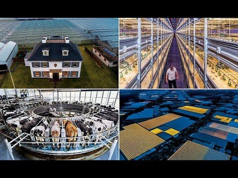 The hi-tech future of farming in the Netherlands