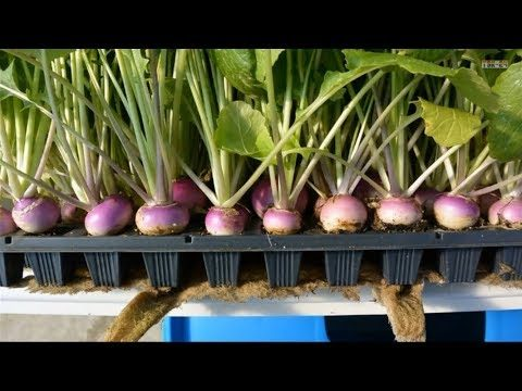 Hydroponics – at Home and for Beginners