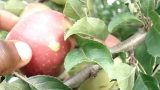 Backyard Orchard – Home Victory Garden Vegetable Garden and Fruit Orchard (5)