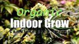 Indoor Organic Cannabis