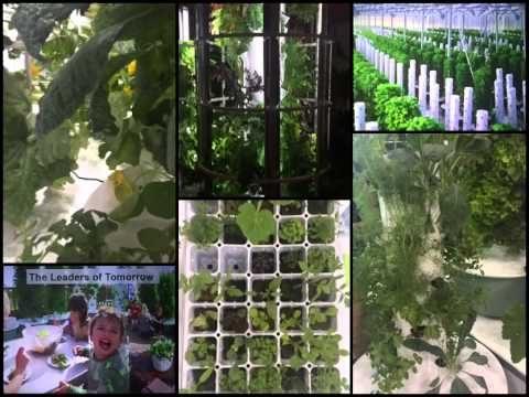 Juice Plus+ Tower Garden display