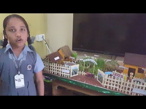 School Project – Organic Gardening and Go Green