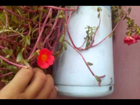 Full Roof Garden with waste Bottles II Video