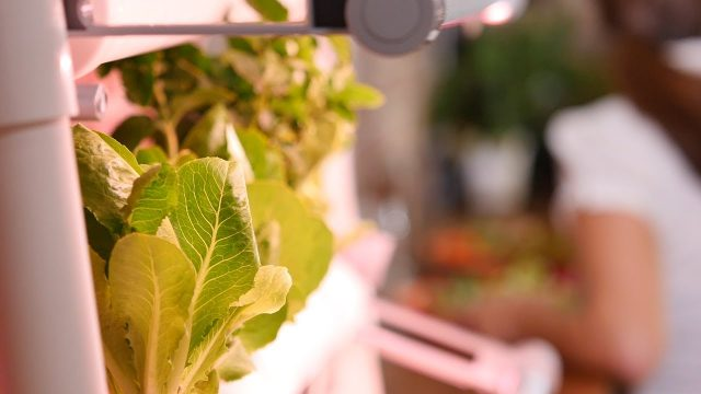Opcom Growbox Commercial  – Indoor Gardening