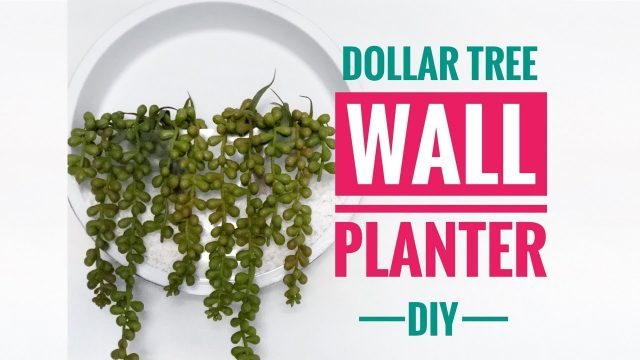 DIY Dollar Tree Wall Planter – Great For Air Plants
