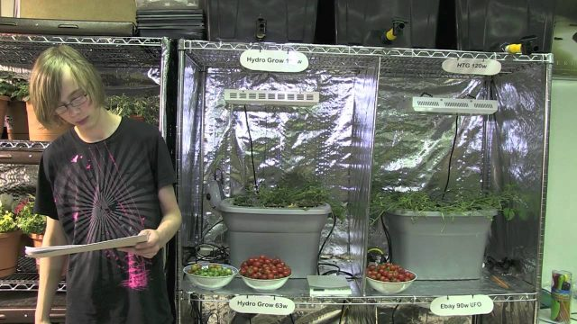 Hydroponic tomatoes Part 2 – Hydro Grow vs HTG vs Generic