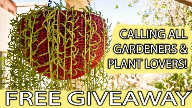 Hanging Succulent Cuttings Giveaways! / Joy Us Garden